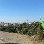 Δέντρα Μήδεια Αττική 1
